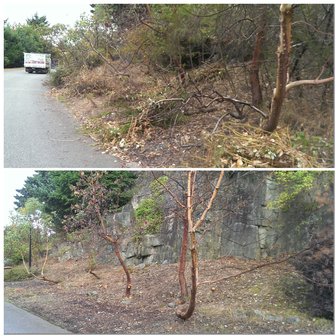 West Vancouver Boulevard Clean-up