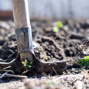 shovel in a garden