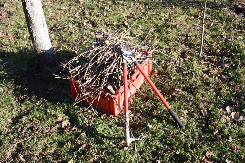 Spring Yard Cleanup